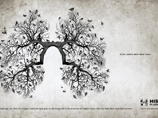 Histoplasmosis Awareness Print Ad -  Lungs