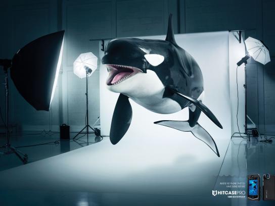 Hitcase Print Ad -  Killer whale