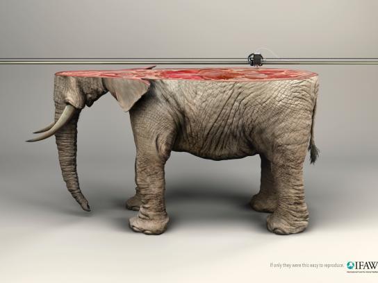 IFAW Print Ad -  Elephant