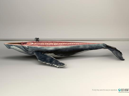 IFAW Print Ad -  Whale