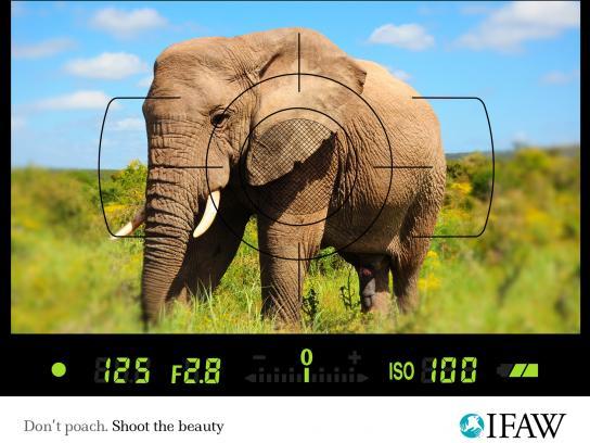 IFAW Print Ad -  Anti-poaching, Elephant