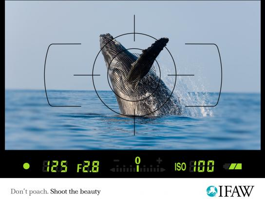 IFAW Print Ad -  Anti-poaching, Whale