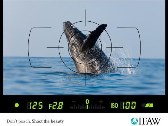 IFAW Print Ad -  Anti-poaching, Whale