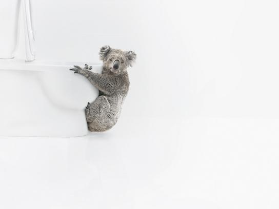 Ambi Pur Print Ad -  Koala