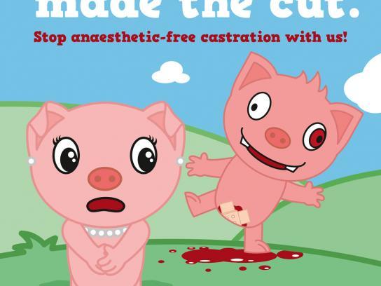 Deutscher Tierschutz Print Ad -  Pig