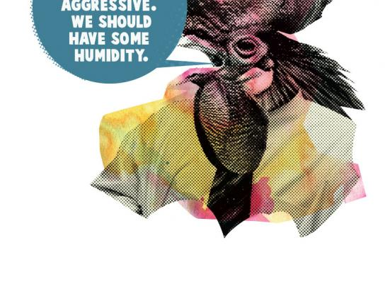 Thinkpot Print Ad -  Cock