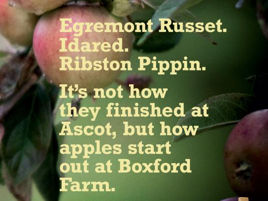 Copella Print Ad -  The fruit of our knowledge, Ascot