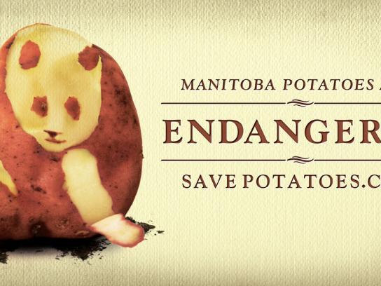 The Potato Coalition Of Manitoba Print Ad -  Panda