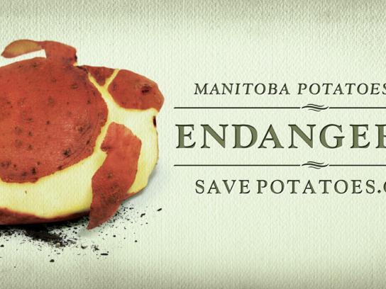 The Potato Coalition Of Manitoba Print Ad -  Turtle