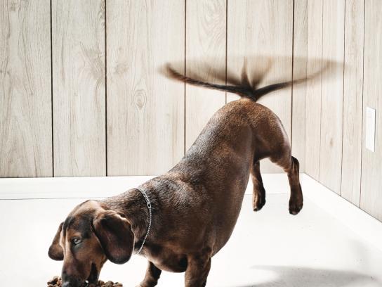Purina Print Ad -  The Dog