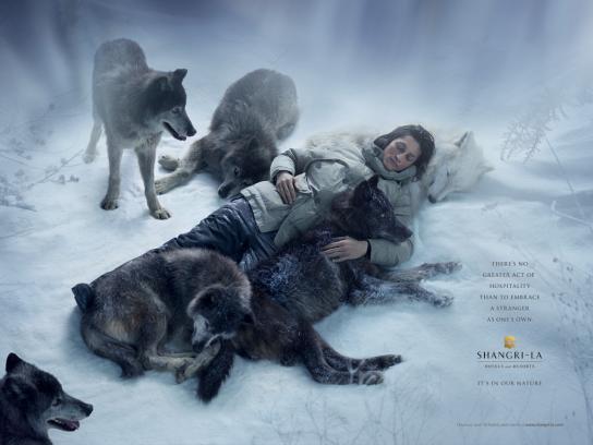 Shangri-La Print Ad -  Wolf