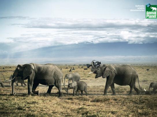 Animal Planet Print Ad -  Elephants