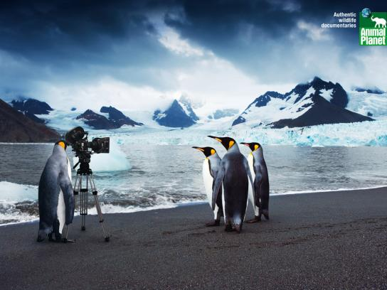 Animal Planet Print Ad -  Penguins