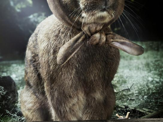 Stadt Northeim Print Ad -  Annoyed forester, Rabbit