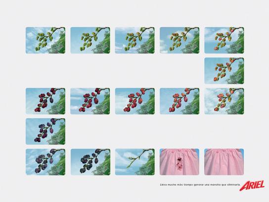 Ariel Print Ad -  Berries