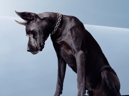 BMW Print Ad -  Dog