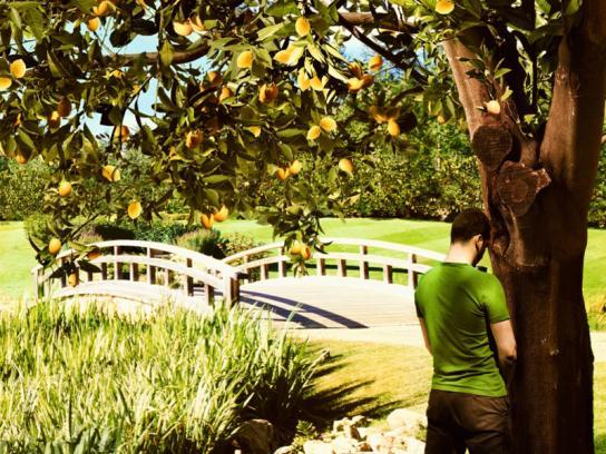 Bref Print Ad -  Lemon garden