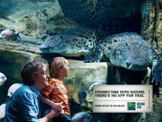 Bronx Zoo Print Ad -  Crocodile