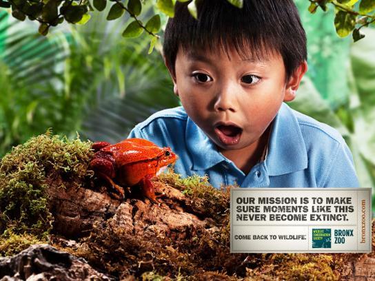 Bronx Zoo Print Ad -  Frog