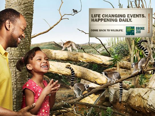 Bronx Zoo Print Ad -  Lemurs