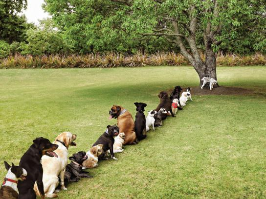 Purina Print Ad -  Tree