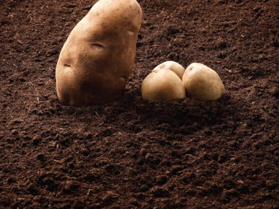 Calgary Farmers' Market Print Ad -  Potatoes