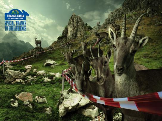 Transylvania Off Road Competition Print Ad -  The Goats
