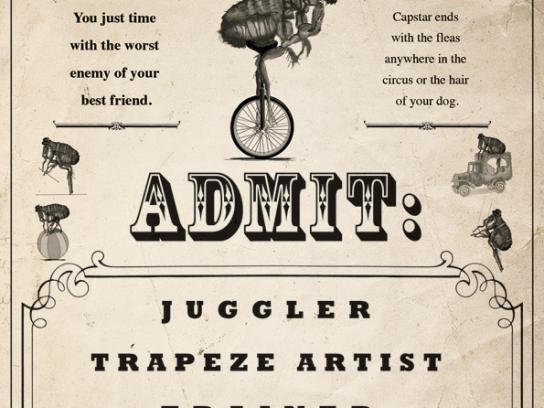 Capstar Print Ad -  Flea circus
