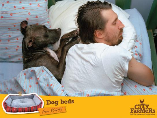 City Farmers Print Ad -  Dog beds
