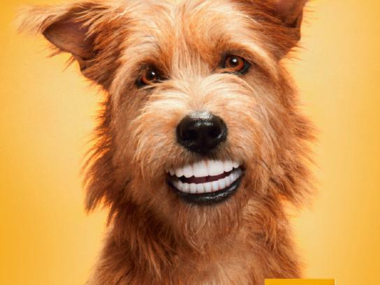 Pedigree Print Ad -  Doggie dentures