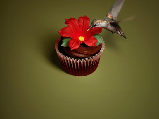 Eini & Co cupcakes Print Ad -  Hummingbird