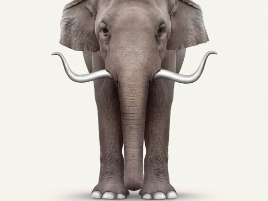 Perth Zoo Print Ad -  Elephant Art -  Dali