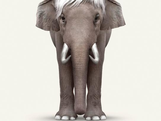 Perth Zoo Print Ad -  Elephant Art - Warhol