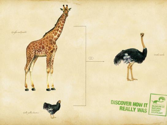 Museum of Natural History Stuttgart Print Ad -  Ostrich