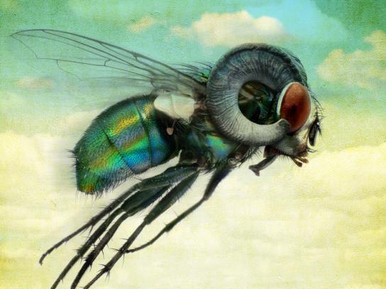 Saatchi & Saatchi Print Ad -  Fly