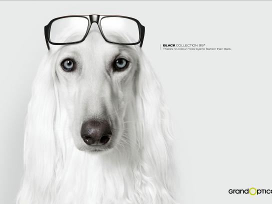 GrandOptical Print Ad -  Dog 1