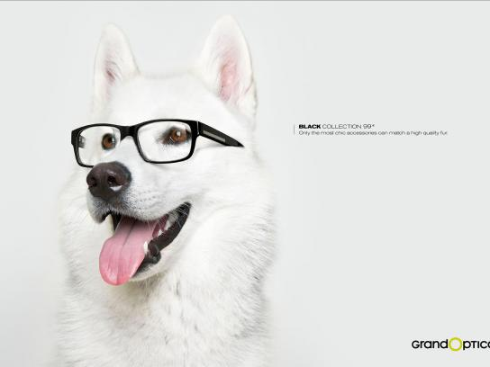 GrandOptical Print Ad -  Dog 4
