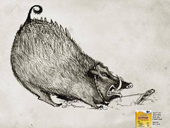 Gelmax Print Ad -  Boar
