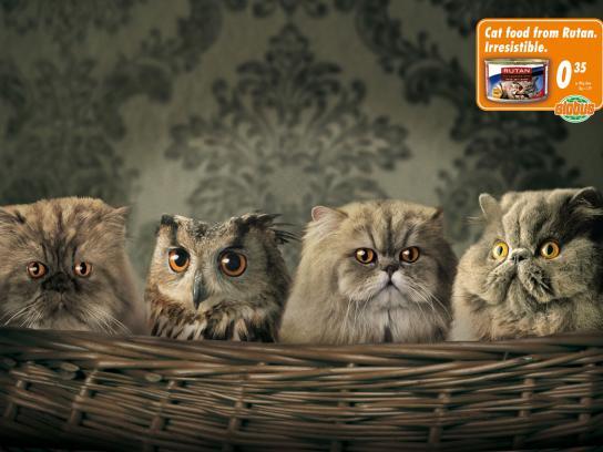 Wannabe Cats, Owl