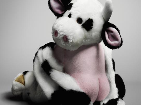 IG Print Ad -  Cow