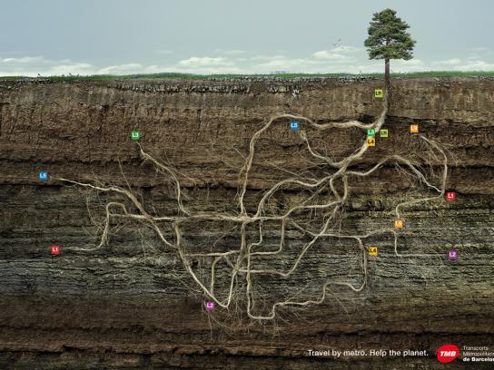 TMB Print Ad -  Tree