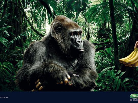 Land Rover Print Ad -  Gorilla