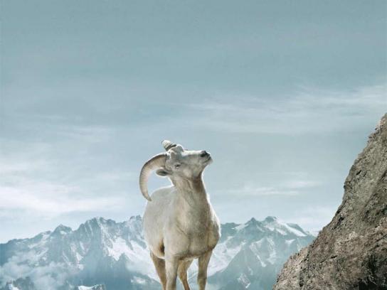 Land Rover Print Ad -  Bighorn sheep