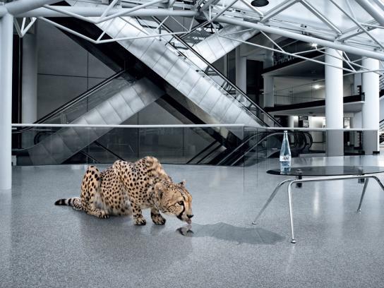 La Vie De Luc Print Ad -  Leopard