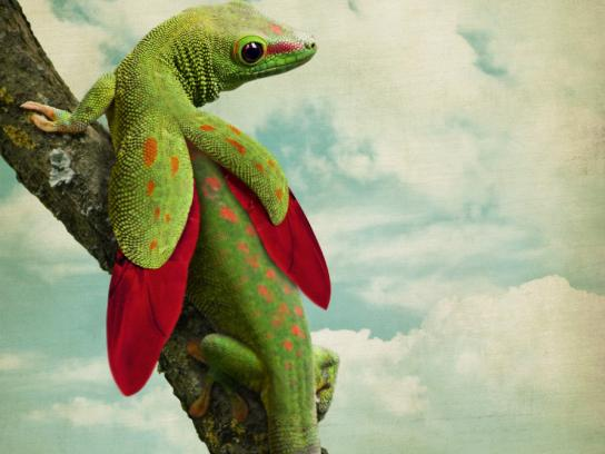 Saatchi & Saatchi Print Ad -  Lizard