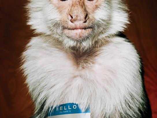 Lucky Monkey Petting Zoo Print Ad -  Hobo