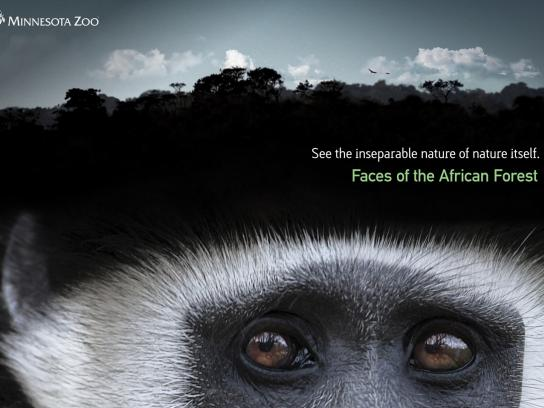 Minnesota Zoo Print Ad -  Faces of the African Forest, Horizon