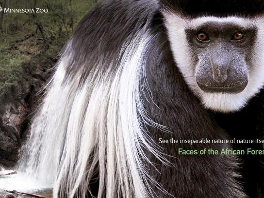 Minnesota Zoo Print Ad -  Faces of the African Forest, Waterfall