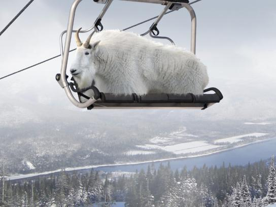 Marble Mountain Print Ad -  Mountain Goat