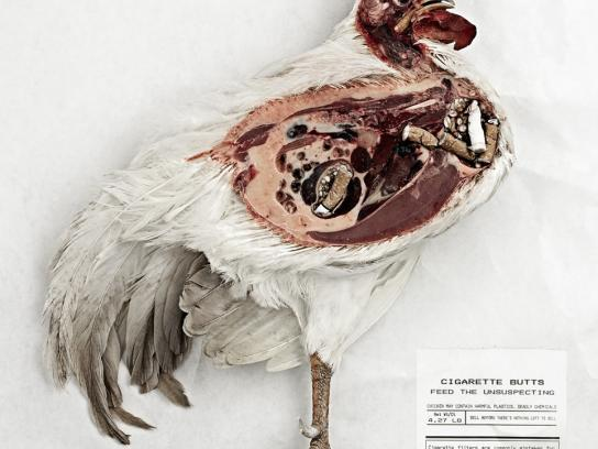 NoButts.org Print Ad -  Chicken